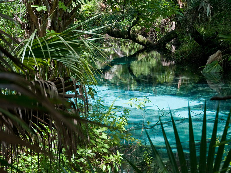 Palatka Resorts Near St Johns River Fl Ravine State